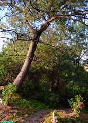 TheNeighborhoodForest