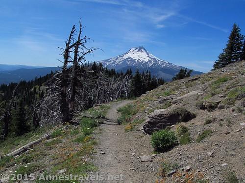 Mt. Hood from below Lookout Mountain, Oregon
