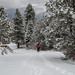 Snowshoeing...yay for Snow! by Olancha Peak