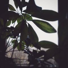 B&W and green #instaphoto #photooftheday #travel #everydaylife #france #creation #inspiration