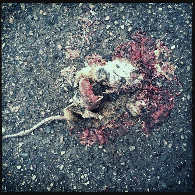 roadkill@walpurgistal