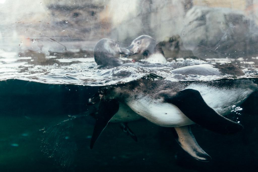 Woodland Park Zoo 15