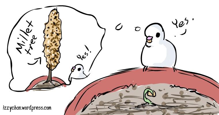 white bird gardening danger bird budgie millet