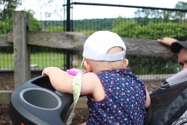 Turtle Back Zoo - Peyton's first zoo!