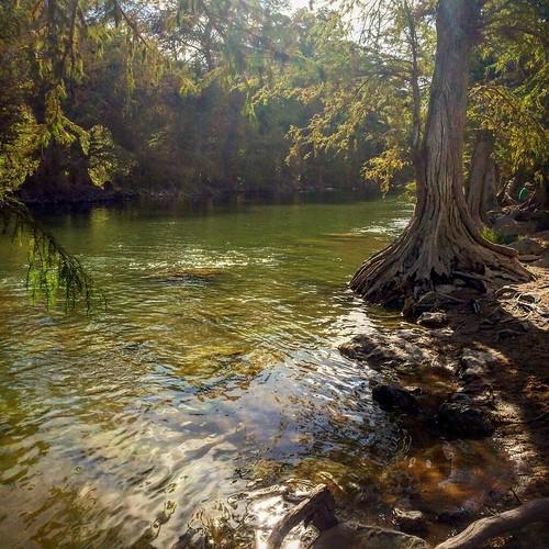 Cypress magic at Pedernales Falls.