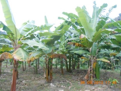 Picture 3 - bananas
