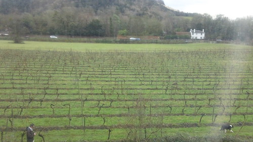 View of vineyards & Boxhill