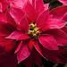 Feliz Navidad y Prospero Año Nuevo.  Merry Christmas and Happy New Year.Bones Festes!!! by Esteve Roca