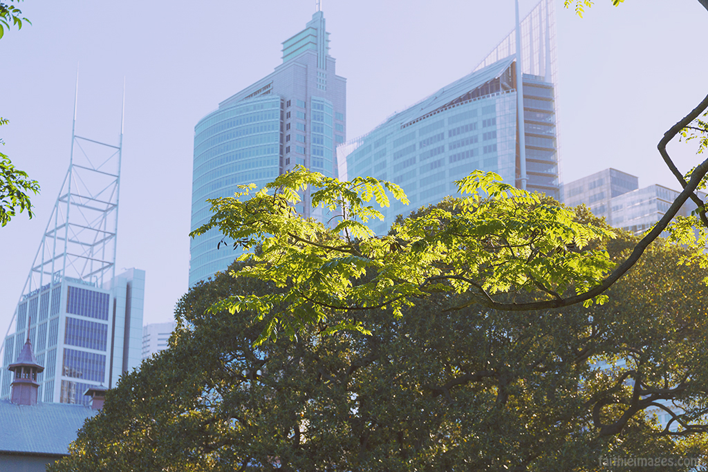 Trees and the city, Sydney version