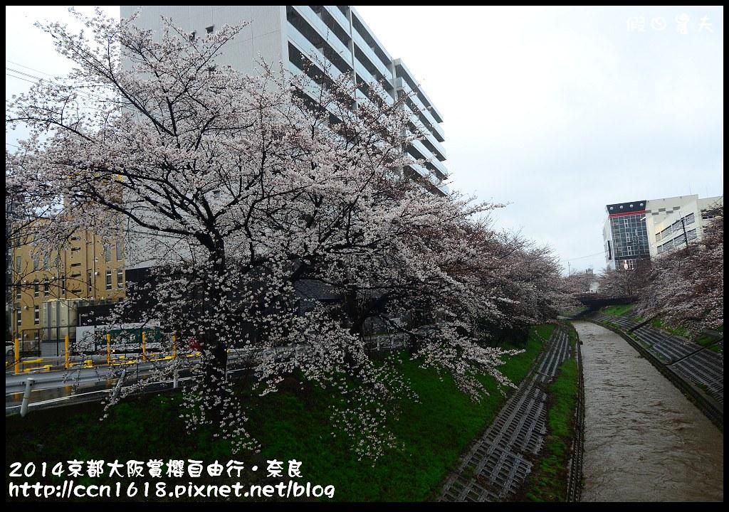 2014京都大阪賞櫻自由行.奈良DSC_0796