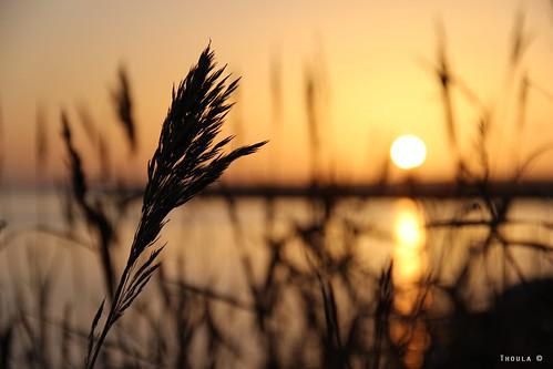 sunset sea mer nature landscape zen paysage helsingor couchédesoleil danemark snekkersten