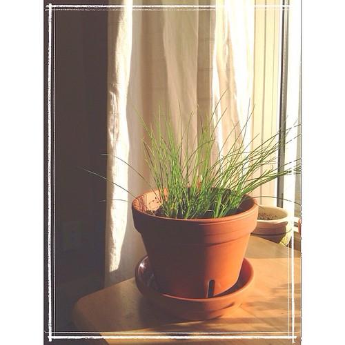 February 26 - Grow