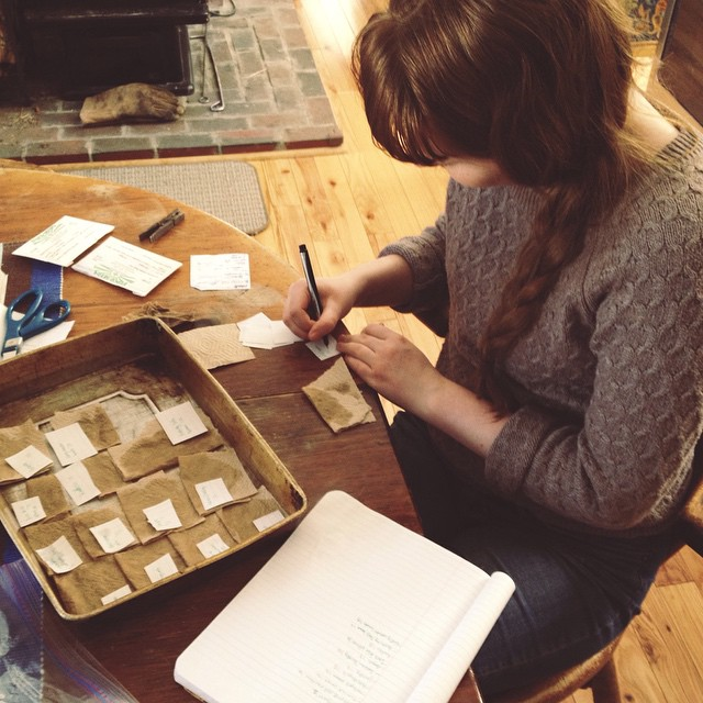 Someone's being meticulous and cataloging our older seeds and testing germination. She's far more patient than I am. #unschooling #teen #alwaysunschooled