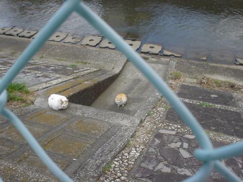 河原のネコ