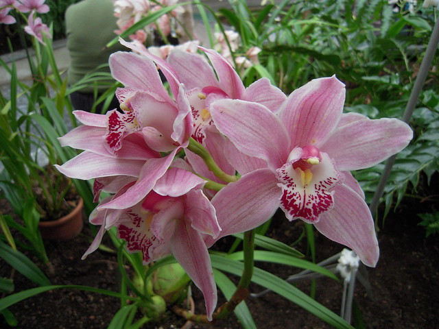 Tallinn BG Orchid Show 2015