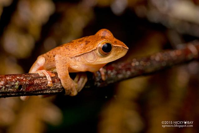 Frog (Anura) - DSC_3008