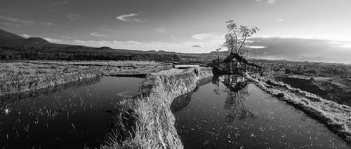 bali ricepaddies hdr riceterraces mountagung candidasa ptgui gunungagung 2013