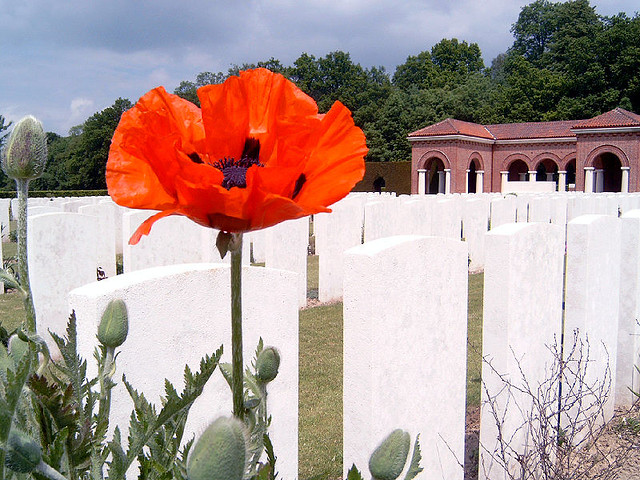 Poppy in WW1 Cemetery