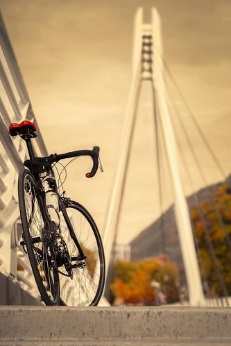 bridge fall bike bicycle foliage universityofutah roadbike specialized uofu bridg legacybridge