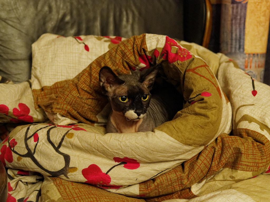 Обои поза, боке, черно-белый, природа, кот, лежит, лето, Кошка, фон, морда, отдых, чёрный, Котя, Kote, желтые глаза, зелены, трава. Кошки foto 17