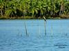 Tirur River_Malappuram_Kerala