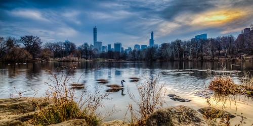 park blue usa sun lake newyork water animals skyline relax us geese cityscape unitedstates centralpark manhattan united goose states hdr thelake