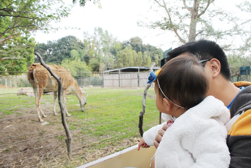 family day at the santa ana zoo