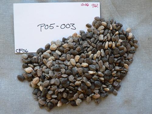 P05-003 CF06 S1