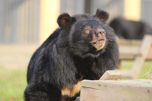 Nhan Ai enjoys the great outdoors in her enclosure