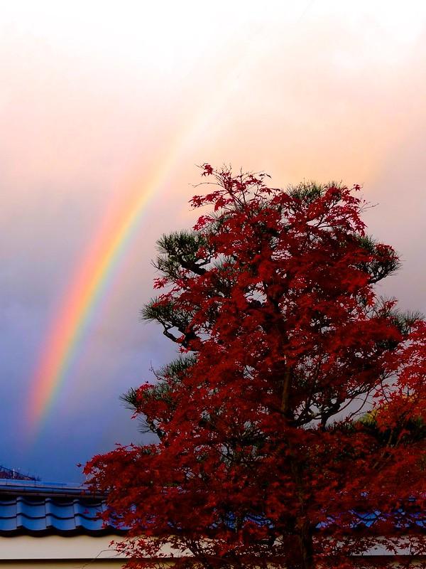 Kyoto Momiji 2014 Ichijoji 117