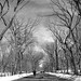 The Mall at Central Park by jomak14