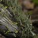 lichen landscape by nervous system