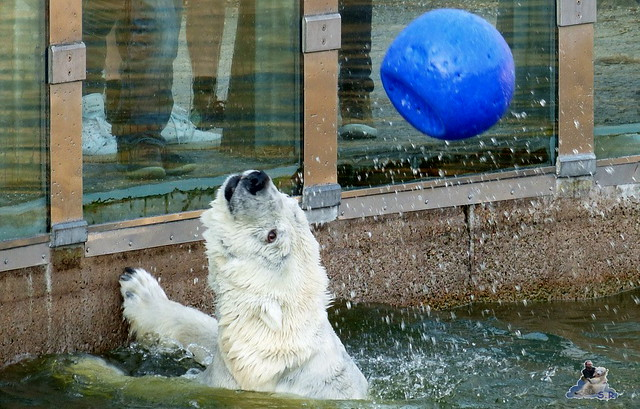 Zoo Berlin 19.03.2015  13