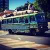 Monkey bus #bus #onibus #monkey #macaco #serranegra #saopaulo