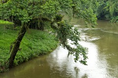 wetland, stream, floodplain, water, tree, river, bank, plant, riparian forest, watercourse, bayou, jungle, waterway,