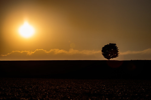 sunset summer cloud ontario canada color colour tree silhouette backlight rural landscape photography warm earth farm hill ground land greater napanee cans2s greaternapanee