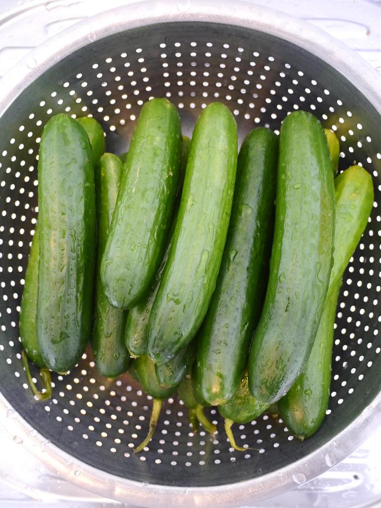 Giant dill pickles - pickled cucumber recipe - Padaek