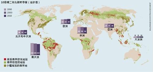 森林的碳儲存