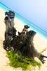 Guardalavaca Cuba  IMG_1676.jpg