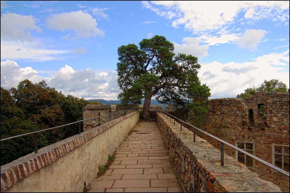 Baum & Burg