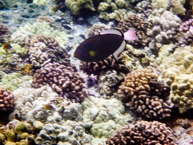 Under the Sea_Maui_Melody Mak_7