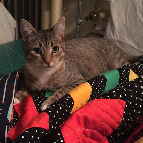 Not. Helping. #catsonquilts #catswhoquilt #catsofinstagram