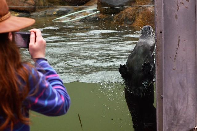 Otter Paparazzi