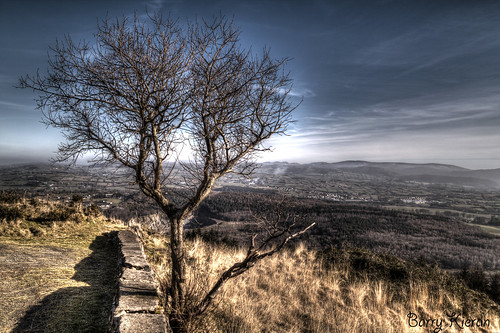 mountain color tree canon view flagstaff hdr 500d rebelx1i