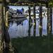 Mottled reflections by Tony Tomlin