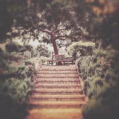The Gardens At Waite Arboretum