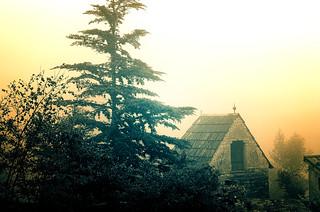 Ecos en la niebla
