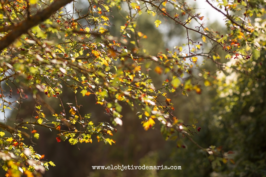 Ramas de otoño