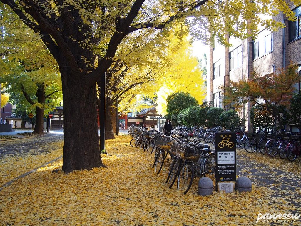The University of Tokyo (Todai) TOKYO_0039