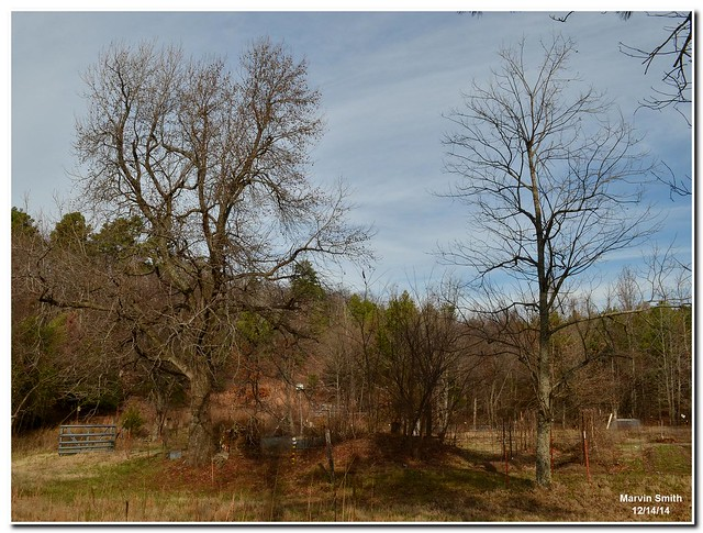 Garden Area (Sweetgum & Persimmon)